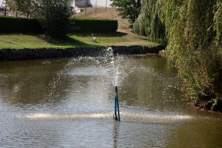 De visclub probeert met extra zuurstofpompen de vissen in de Warande vijver in leven te houden.
