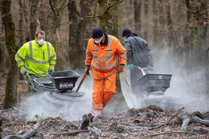 Steenmeel wordt uitgestrooid in het bos bij Kootwijk.