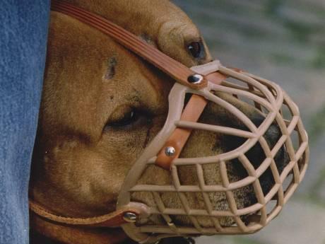 Dit jaar al 7 keer muilkorf opgelegd voor agressieve hond
