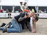 Van kattencafé tot honden-escaperoom: Animal Event bij de Beekse Bergen