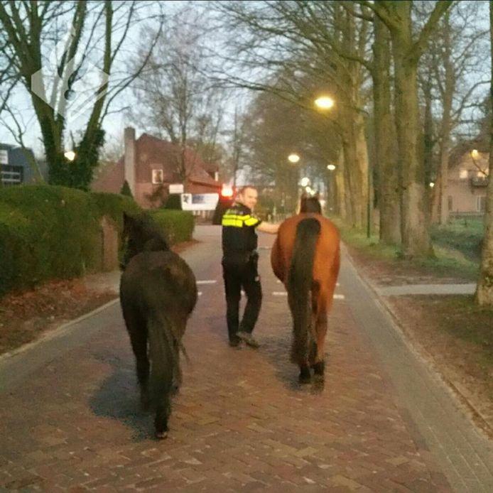 Twee paarden waren spontaan gaan wandelen in Heeswijk-Dinther.