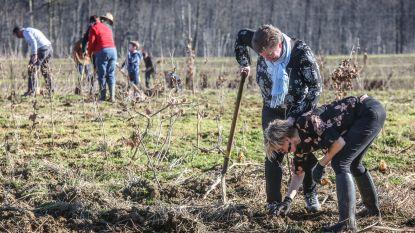 Kinderen planten nieuw bos in Ieperse deelgemeente Sint-Jan