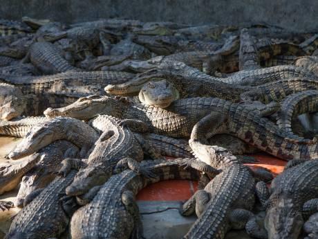 Un fugitif retrouvé nu dans une zone infestée de crocodiles