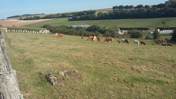 Een hoopje puin waarop ooit de sokkel met kruis van het kerkhof (foto onder) stond. Meer is er niet over van de begraafplaats, waar nu enkel koeien grazen.