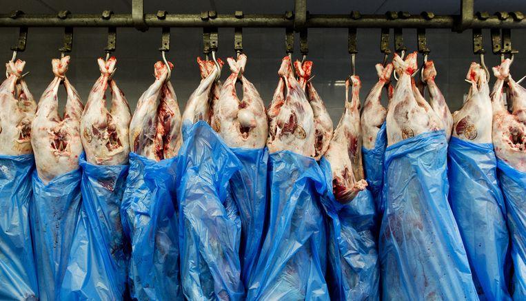 Landbouwminister Carola Schouten: 'Ik denk dat de volksgezondheid toch echt belangrijker is dan of je morgenavond nog een stukje vlees op je bord hebt liggen.' Beeld ANP