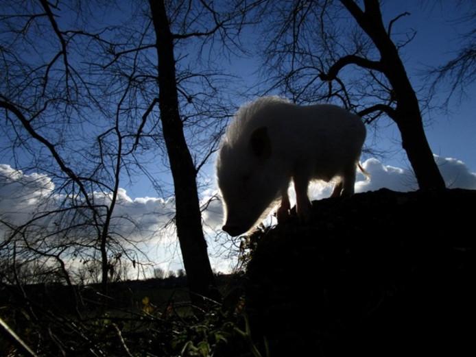 Silhouet Francis Bacon. Foto Kim Pattiruhu