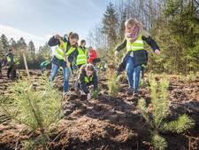 Overijsselse jeugd plant honderden bomen in Staphorst