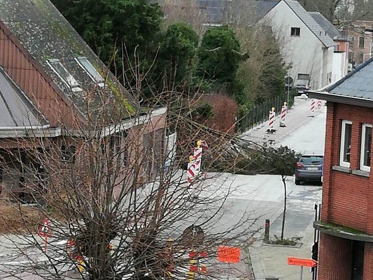 In de Olmendreef in Lede kwam een spar op straat terecht.