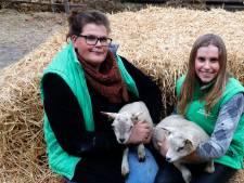 Vers lamsvlees zo van de boer