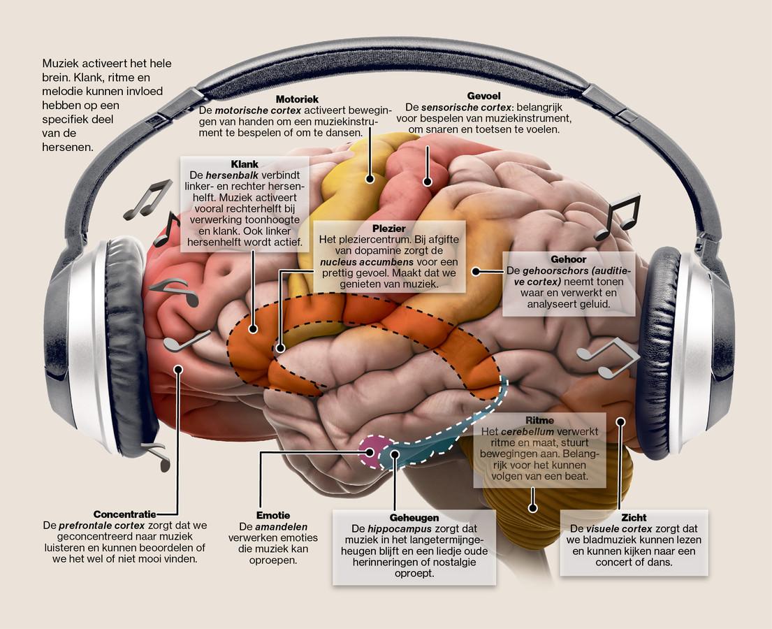 Wat muziek doet met het brein.