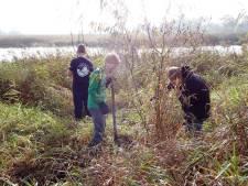 Vrijwilligers schieten Staatsbosbeheer te hulp bij ontbossing van De Weerribben