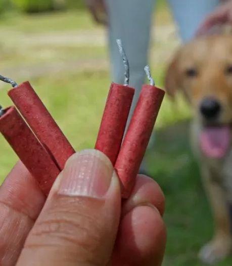 Dood hondje door ontploft vuurwerk wekt afschuw: 'Hoofd van het beestje was geëxplodeerd'