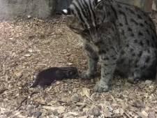 Gezinsuitbreiding voor vissende katten in Blijdorp