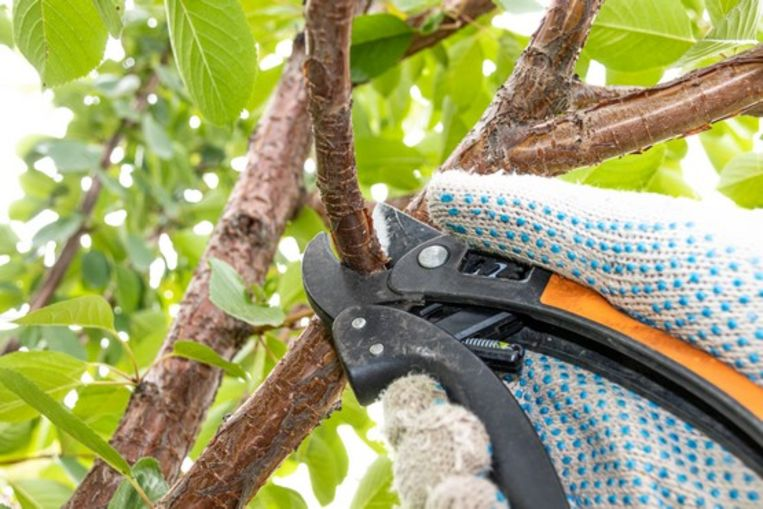 Zaterdag 29 februari in De Helix: Workshop 'Verzorgen en snoeien van fruitbomen'.