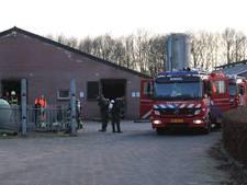 69 kalveren uit gierkelder in Erp gered