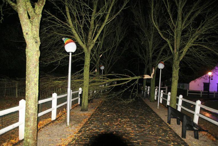 Een omgevallen boom bij de boerderij in Plopsaland