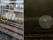 Treinverkeer in Londen stilgelegd door ontsnapte hond