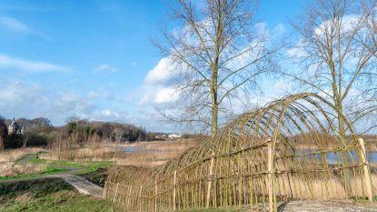 Wilgentunnel in Kortbroek in zijn glorie hersteld