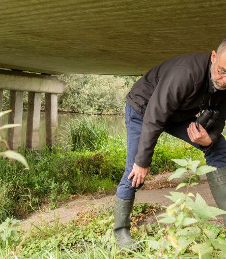 De otter aarzelt nog met zijn komst naar Nederland: 'Hij komt af en toe de grens over'