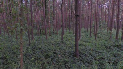 Werkstraf en celstraf met uitstel voor vader en zoon die dief vastbonden en in bos achterlieten