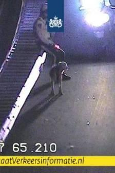 Kop-staartbotsing voorkomen: hond 'in uitgelaten stemming' staande gehouden langs A2