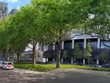 Bomenridders strijden voor 'monumentale' platanen bij Rotterdam Centraal