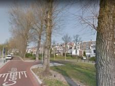 Den Haag begint met omzagen populieren die in slechte staat zijn