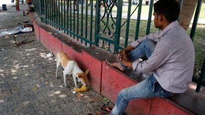Zes kinderen door wilde honden verscheurd in India
