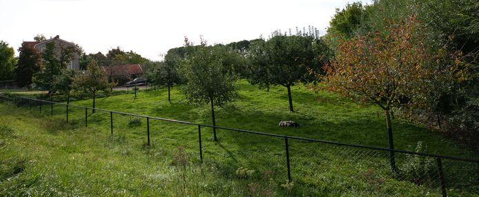 De boomgaard van De Vries aan de Maasdijk in Rossum