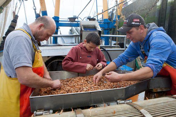 Enkele garnaalvissers bij hun vangst. Komt dit 'Goud van de Noordzee' straks steeds minder vaak voor.