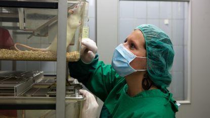 """Wetenschappers verdedigen dierproeven: """"Zonder experimenten geen remedie voor alzheimer"""""""