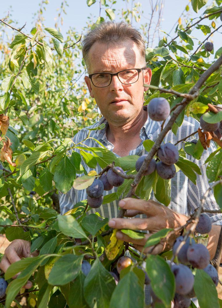 Fruitteler Kees Hamelink in zijn boomgaard.  Beeld Johan van der Heijden
