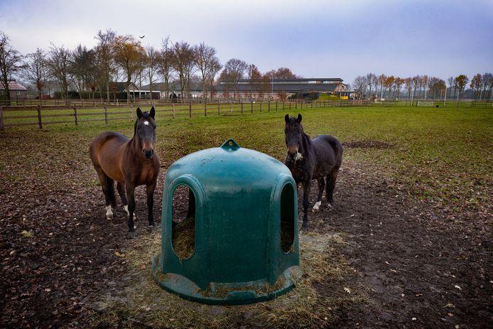 De 'paardenboulevard' in Valkenswaard blijft groeien. Op de achtergrond de stallen van Australisch menkampioen Boyd Exell.