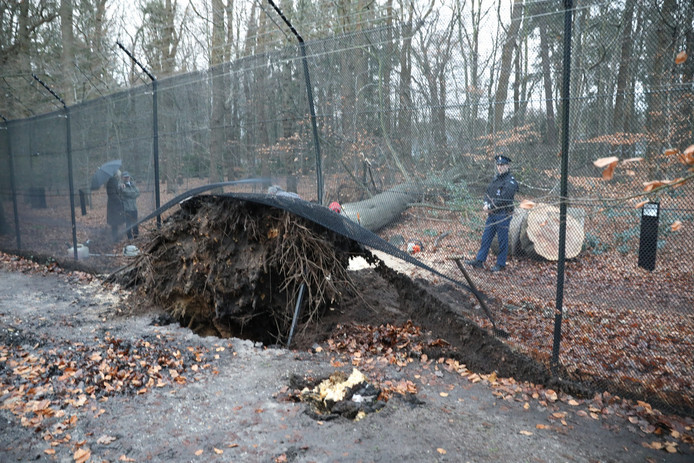 Door het hek van kasteel Drakensteyn in Lage Vuursche, de residentie van prinses Beatrix, viel een boom.