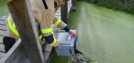 Brandweer redt jonge waterhoentjes uit afvoerbuis van waterzuivering