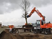 Nieuwe stek voor bomen Zeevaartweg