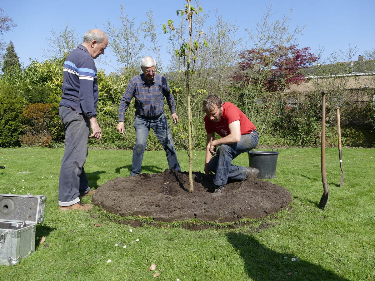 Waalwijk is een van de plaatsen die al een Anne Frankboom hebben.