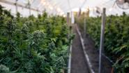 Cannabiskwekers veroordeeld tot drie jaar cel