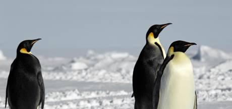 Des colonies de manchots menacées par un iceberg géant en Atlantique Sud