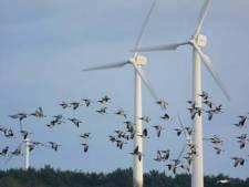 Nóg meer windmolens op Voorne-Putten kunnen zorgen voor meer vogelsterfte