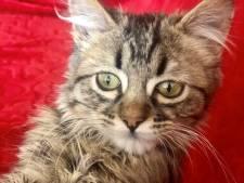 """Le Pérou met les points sur les i: """"Le chaton Lee a toujours été le bienvenu ici"""""""