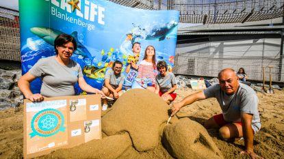 Sea Life plant wereldrecord zeeschildpaddensculpturen uit zand