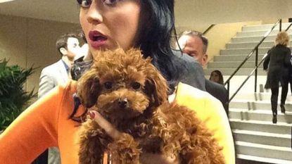 Katy Perry werd geschorst om 'aanranden' boom
