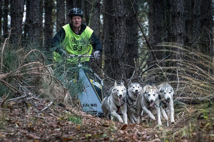 De Siberische husky's van Paul Nuyts zoeken hun weg in de bossen rond Gilze.