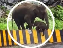 Une mère éléphant aide son bébé à traverser la route avec sa trompe