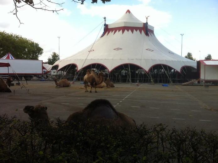 Circus Louis Knie in Oss