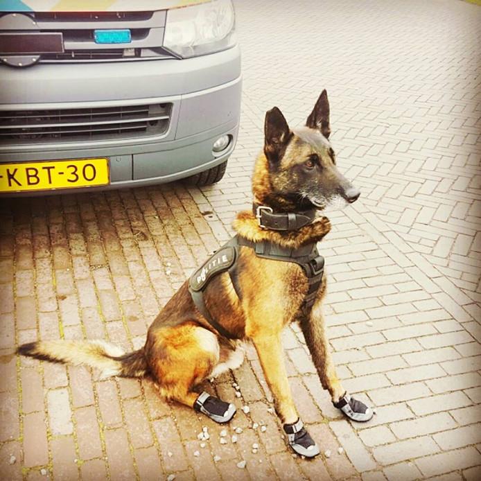 Politiehond Spike, in dienst in onder meer Zutphen.