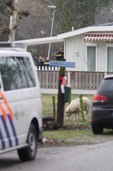 Grootschalig onderzoek bij woonwagenkamp in Deventer: inval door politie en defensie