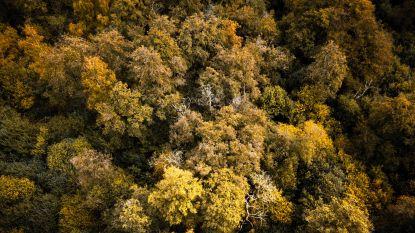 Gemeente neemt bomen over