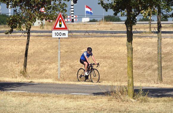 Droog gras in Echteld.